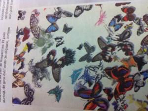 Vole vole dans Instantané image1-300x224